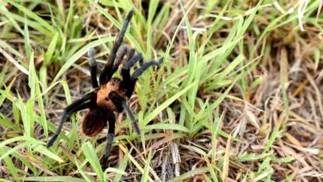 stockvideo's en b-roll-footage met texas brown tarantula - arizona highway signs