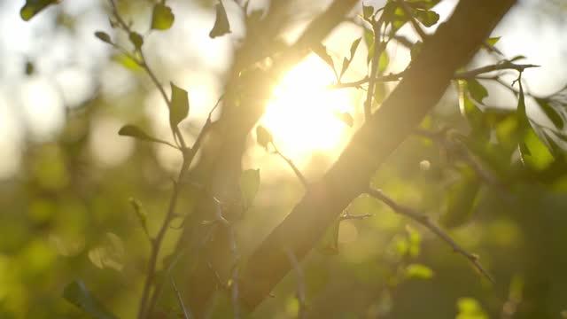 vídeos y material grabado en eventos de stock de paisaje natural del sol de texas durante la hora dorada - organismo vivo