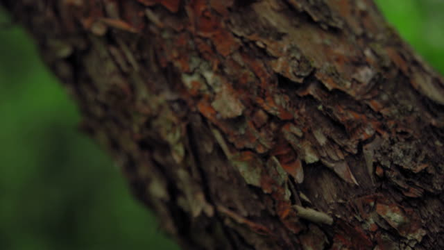 texture of bark of oak tree video