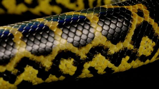 Texture of snakeskin, anaconda video