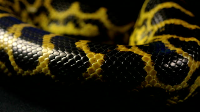 Texture of snakeskin, close up video
