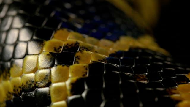 Texture of snakeskin, macro video