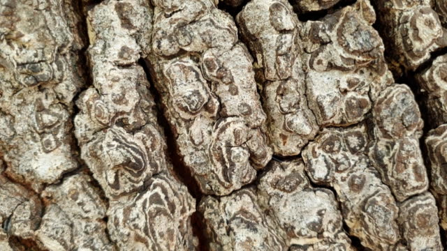 Texture of the bark. Texture of the bark in forest plant bark stock videos & royalty-free footage