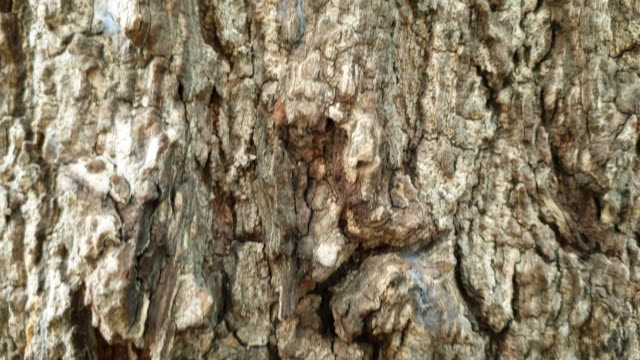 Texture of tree.