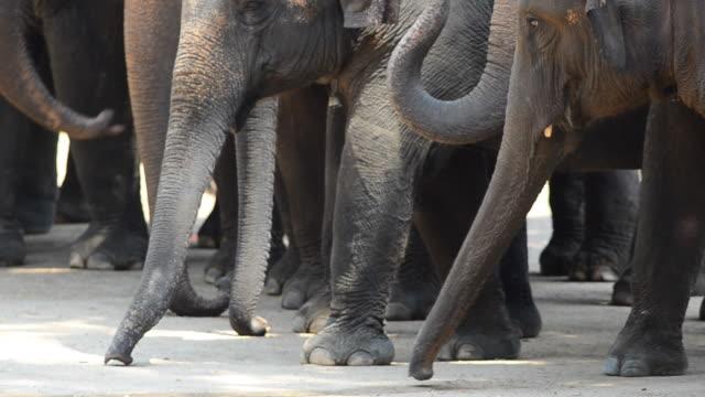 thai elephants video