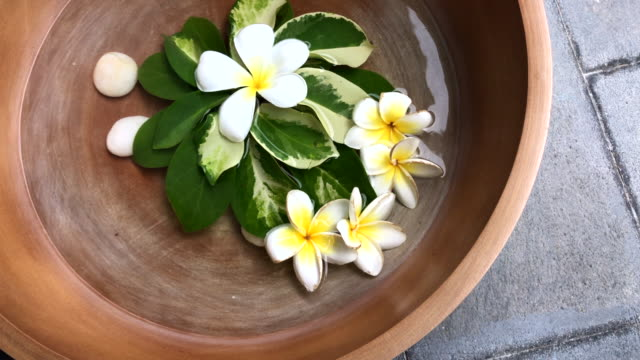 Thai frangipani floating in the water bowl make good aroma , Hua Hin, Thailand. Healthy lifestyle with nature. massage oil stock videos & royalty-free footage