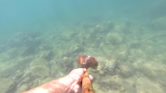vídeos de stock e filmes b-roll de thai moken caça debaixo de água - lapa
