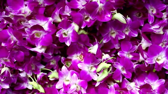 タイの蘭の花市場 - 花市場点の映像素材/bロール