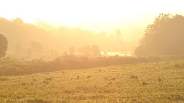 Thailand grassland reserve on moring video