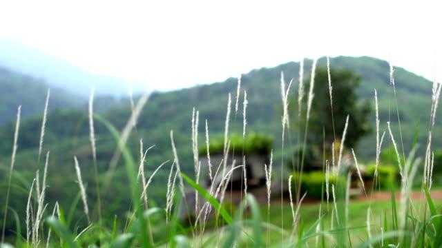 thailand spirit house, san phra phum rean tevoda, pteah phum in grünen bergen der insel phuket. rock und grass. fullhd - kambodschanische kultur stock-videos und b-roll-filmmaterial