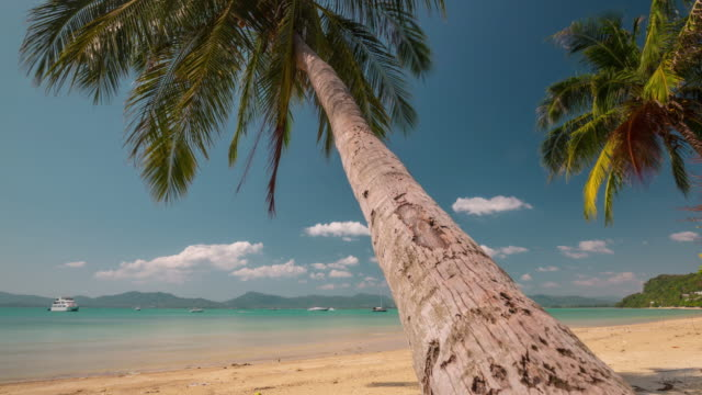 thailand sunny day palm tree beach panorama 4k time lapse phuket video