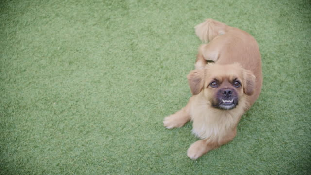 Thanks fur being my friend 4k video footage of an adorable dog on the grass in a garden at home fur stock videos & royalty-free footage