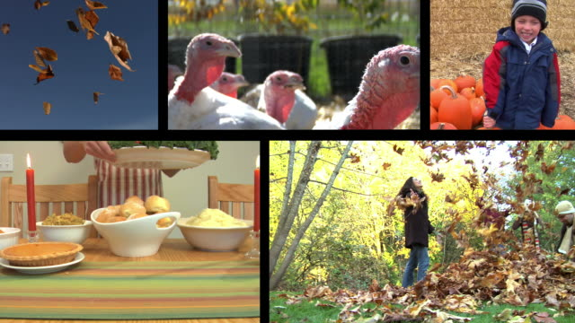 Thanksgiving & Fall Holiday video montage video