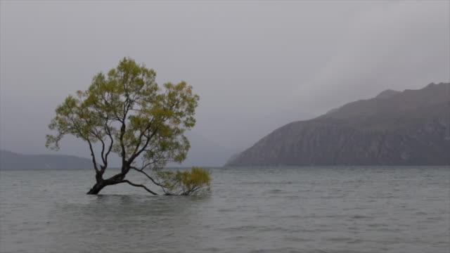 vidéos et rushes de cette arbre de wanaka new zealand stromy temps - lac reflection lake