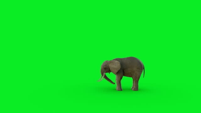 the 3d elephant animation on green screen background and hyper realistic render - wildlife travel stock videos and b-roll footage
