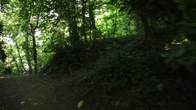 阿達北公園 - 熱帶樹 個影片檔及 b 捲影像