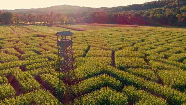 The aerial scenery panoramic drone video of the huge Halloween's Corn Maze in Pennsylvania, Poconos Region video