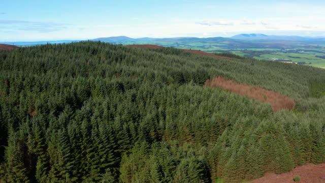 The Aerial view from a drone of Scottish countryside in early morning summer sunlight The view from a drone as it is flown above a hill. The scene includes pine forest and heather growing on the hillside. The rural landscape is seen in the background. The location is in Dumfries and Galloway, south west Scotland. galloway scotland stock videos & royalty-free footage