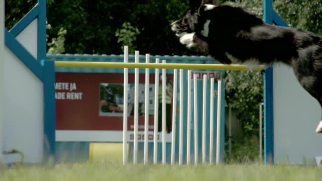 スティック 4 K FS700 オデッセイ 7Q 上飛び跳ね機敏な犬 ビデオ