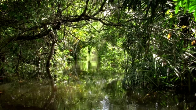 The Amazon River video