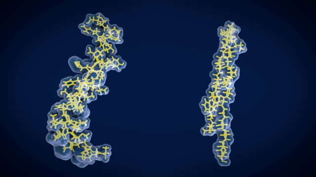 The amyloid-beta peptide: Left: Structure of the amyloid beta peptide in the membrane bound form, right: the free form  can accumulate to amyloid plaques, that are involved in the Alzheimer's disease After being cleaved by the gamma and beta secretases the amyloid beta peptide, which has about 40 amino acid residues,  leaves the membrane, changes shape and aggregates into long fibrils. These fibrils form dense plaques on nerve cells. protein stock videos & royalty-free footage