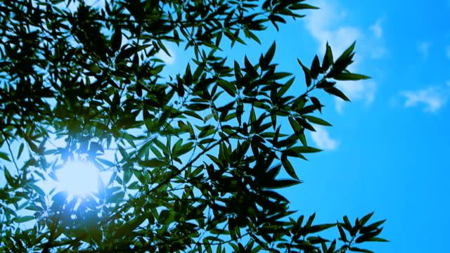 竹の明るい太陽の前に風に揺れ ビデオ