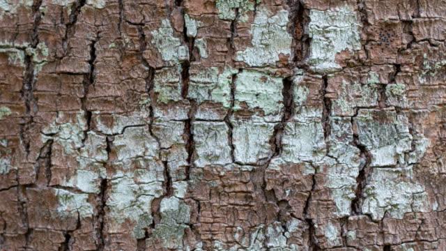 木の樹皮の木のイメージがクローズ アップ - 木目点の映像素材/bロール