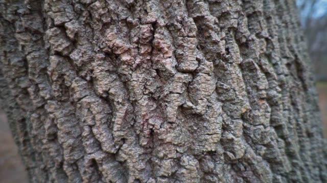 木の木のイメージは森の中で閉じる - 木目のビデオ点の映像素材/bロール