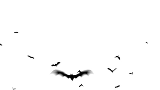 «летучая мышь» - halloween стоковые видео и кадры b-roll