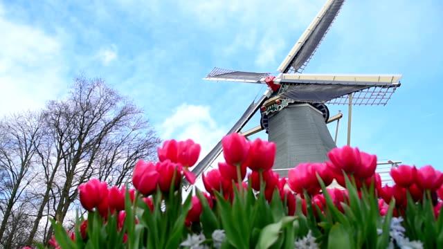 オランダの美しい花 - キューケンホフ公園点の映像素材/bロール