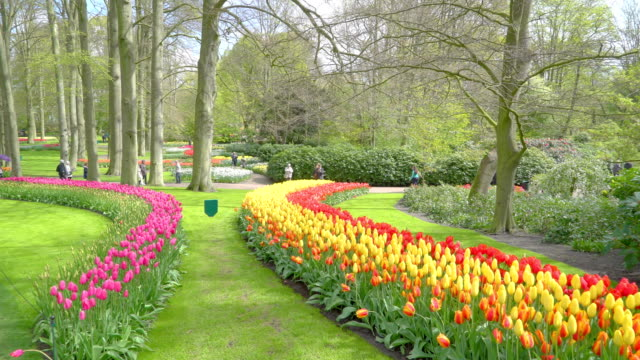 キューケンホフの美しい花春の庭 - キューケンホフ公園点の映像素材/bロール