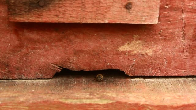 the bees and beehives the bees and beehives arthropod stock videos & royalty-free footage