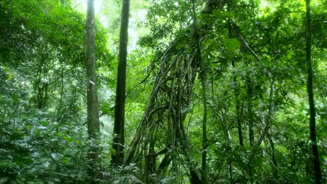 det stora hålet i roten av gigantiska träd. - poconobergen bildbanksvideor och videomaterial från bakom kulisserna