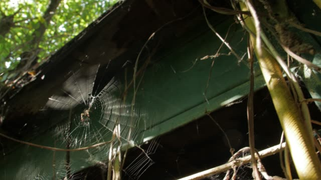 The Big Spiders On Web