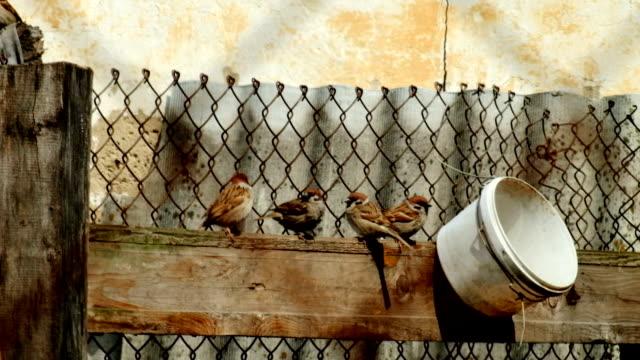 l'uccello sulla parete - appollaiarsi video stock e b–roll