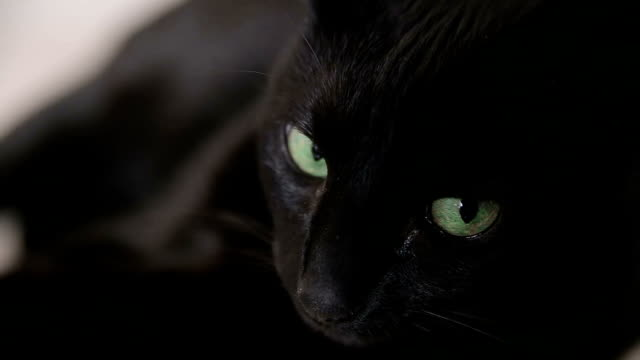 The black cat with green eyes lies on a sofa. video