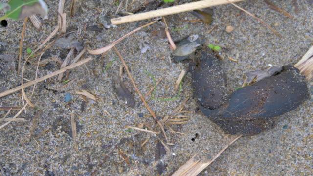 japonya'da yerdeki kara çürümüş hayvan - etçiller stok videoları ve detay görüntü çekimi