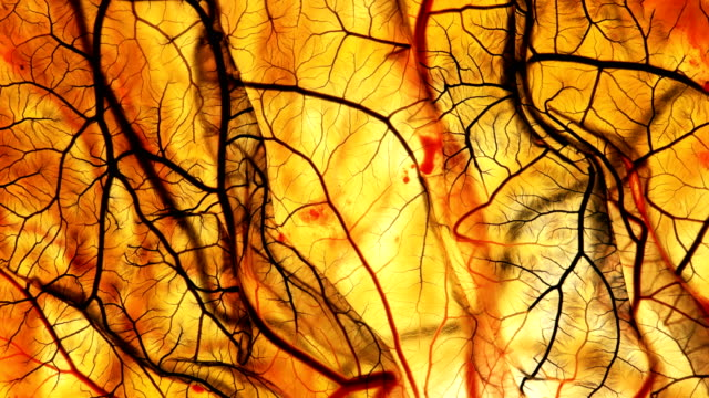 kan damarları akan siyah olur. - doping stok videoları ve detay görüntü çekimi