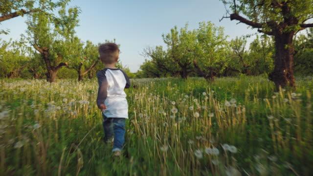 the boy runs through the dandelions for his dog - bambino cane video stock e b–roll