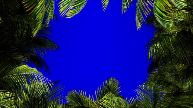 die zweige der palme im wind auf dem blauen bildschirm. schöner sommer geloopt hintergrund. - palme stock-videos und b-roll-filmmaterial