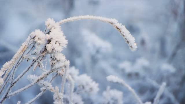 霜で覆われた草の枝は、クリアリングで強く曲がった - 霜点の映像素材/bロール