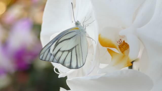 цветок бабочки и орхидеи весной - крыло животного стоковые видео и кадры b-roll
