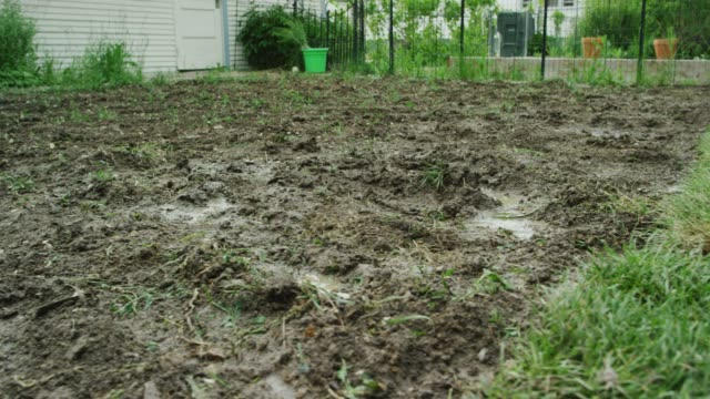The Camera Moves from a Muddy Section of Backyard to Section with Freshly-Laid Sod in a Residential Backyard The Camera Moves from a Muddy Section of Backyard to Section with Freshly-Laid Sod in a Residential Backyard (Laying Sod) mud stock videos & royalty-free footage