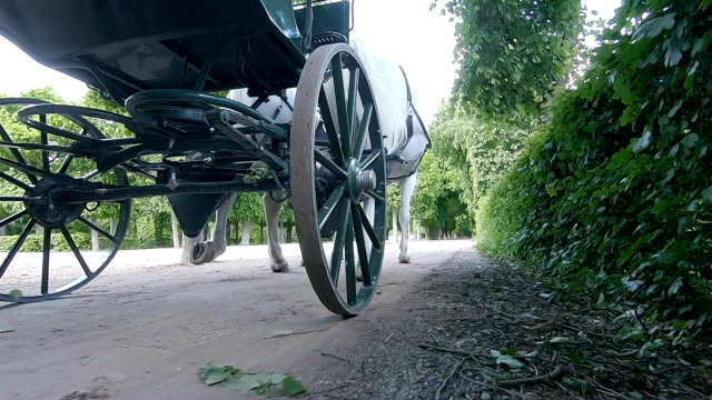 the carriage rides through the park in vienna. austria. - cocchio video stock e b–roll