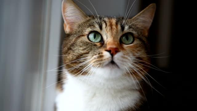 猫の攻撃 ビデオ