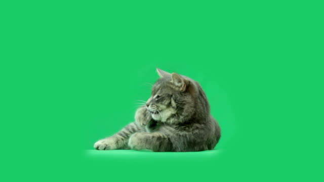 La Cat es comer algo - vídeo