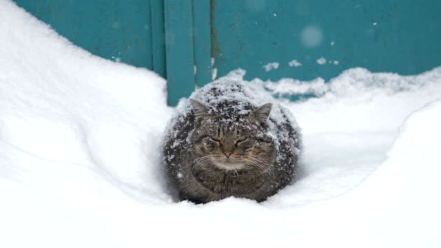 the cat is sitting in the snow.