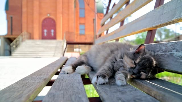 the cat is sleeping on the bench. - penombra video stock e b–roll