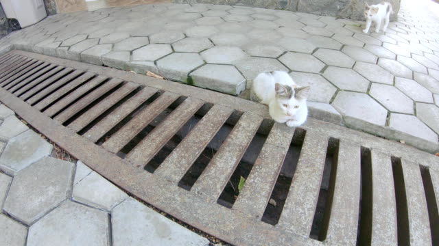 The cat lies on a storm grate