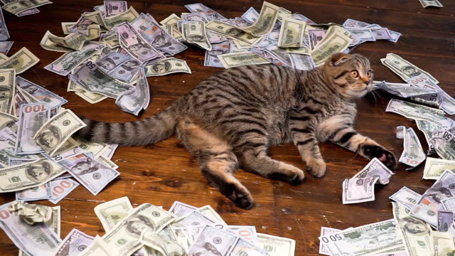 the cat of the rich video